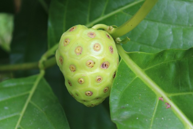 Noni Juice Beauty