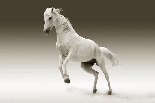 馬プラセンタ
