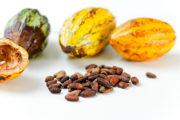 cacao-polyphenol